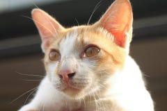 Katt förestående Arkivfoton