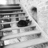 Katt från Malbork royaltyfria bilder