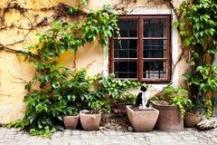 Katt framme av fönstret Arkivbilder