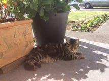 Katt framme av växter Royaltyfria Foton