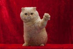 Katt höga fem fotografering för bildbyråer