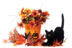 katt halloween Royaltyfria Bilder