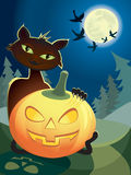 katt halloween Royaltyfria Foton
