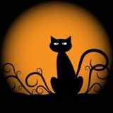 katt halloween Arkivbilder