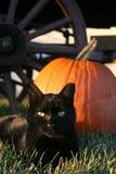 katt halloween Arkivfoto