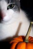 katt halloween Arkivfoton
