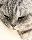 Katt hem- husdjur som är fluffiga, natur arkivfoton