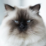Katt hemma arkivfoto