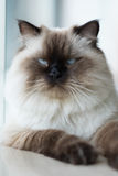 Katt hemma Arkivfoton
