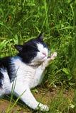katt henne slicka för ben Royaltyfria Bilder
