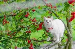 Katt husdjur, vit, kattdjur, gulligt som är ung, djur arkivbilder