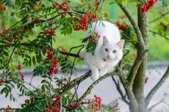 Katt husdjur, vit, kattdjur, gulligt som är ung, djur Arkivbild