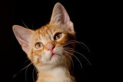 Katt I Royaltyfri Bild
