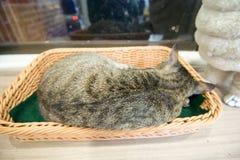 Katt i alishan mountian arkivfoton