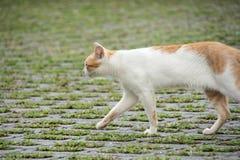 Katt i alishan mountian arkivbilder