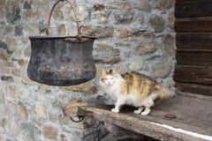 Katt i alpin by, nära en kopparkruka royaltyfri foto