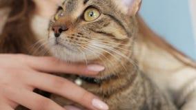 Katt i armarna av flickan arkivfilmer