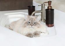 Katt i badrumvask Royaltyfri Foto