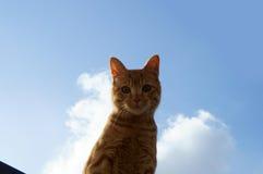 Katt i blå himmel Arkivfoto