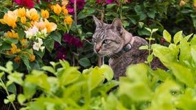 Katt i blommaträdgården royaltyfri bild