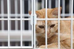 Katt i bur Arkivfoton