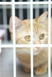 Katt i bur Arkivfoto