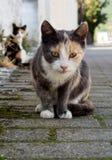 Katt i den grekiska byn arkivbild