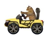 Katt i den gula bilen royaltyfri fotografi