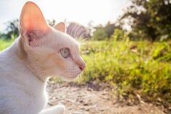 Katt i den ljusa morgonsolen Arkivfoton