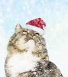 Katt i den santa hatten under snön Arkivfoto