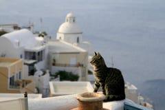 Grekland katt Royaltyfri Foto