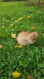 Katt i det gröna gräset arkivfoton