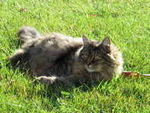 Katt i djur för gräsfält Arkivfoto
