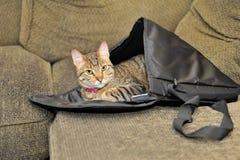 Katt i en axelväska Royaltyfri Fotografi