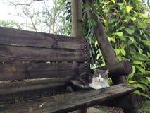 Katt i en bänk Royaltyfria Bilder