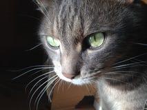 Katt i en boxas Royaltyfri Bild