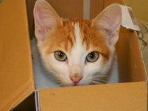 Katt i en boxas Fotografering för Bildbyråer
