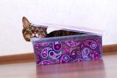 Katt i en boxas Royaltyfria Bilder