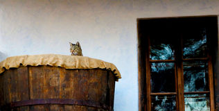 Katt i en boxas Royaltyfria Foton