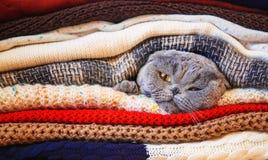 Katt i en bunt av varm kläder Selektivt fokusera royaltyfri fotografi