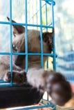 Katt i en bur Arkivfoto