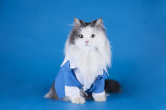 Katt i en dräkt Arkivbilder