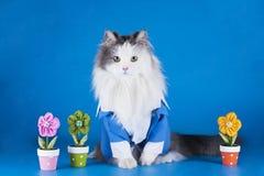 Katt i en dräkt Arkivbild