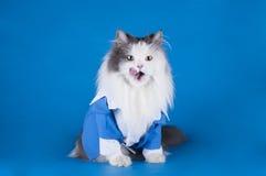 Katt i en dräkt Arkivfoto