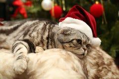 Katt i en dräkt av Santa Claus Arkivfoto