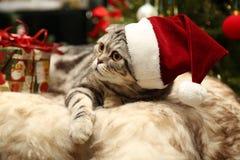 Katt i en dräkt av Santa Claus Royaltyfri Bild