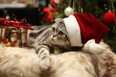 Katt i en dräkt av Santa Claus Royaltyfri Foto