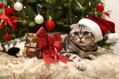 Katt i en dräkt av Santa Claus Royaltyfria Foton
