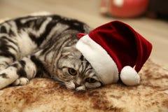 Katt i en dräkt av Santa Claus Arkivbilder