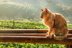 Katt i en jordgubbelantgård Arkivfoton